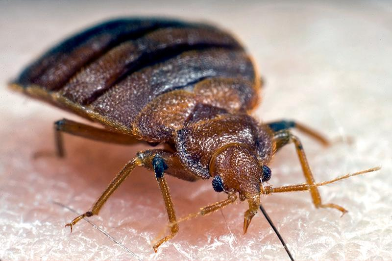 Prevent Bed Bugs From Spreading To Other Rooms