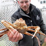 Crabbing Becomes Popular Hobby in the Bay Area