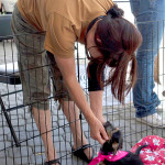 East Bay SPCA Encourages Community  Adoptions at 5th Annual Adopt-a-Thon