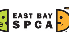 East Bay SPCA's new video encourages pet adoption