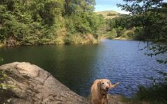 Canine enthusiast wins Best of the East Bay award
