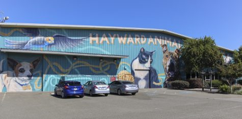 Hayward animal shelter under quarantine