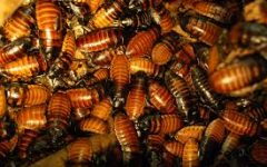 Elementary school faces ongoing roach infestation