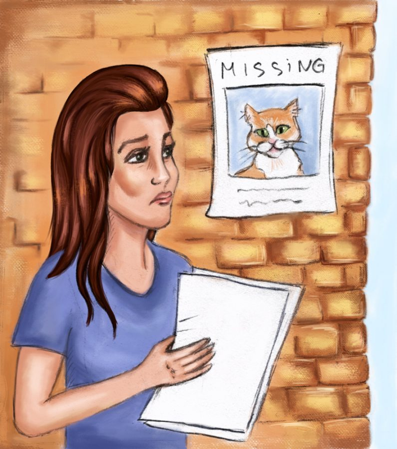 I lost my mind when my cat left