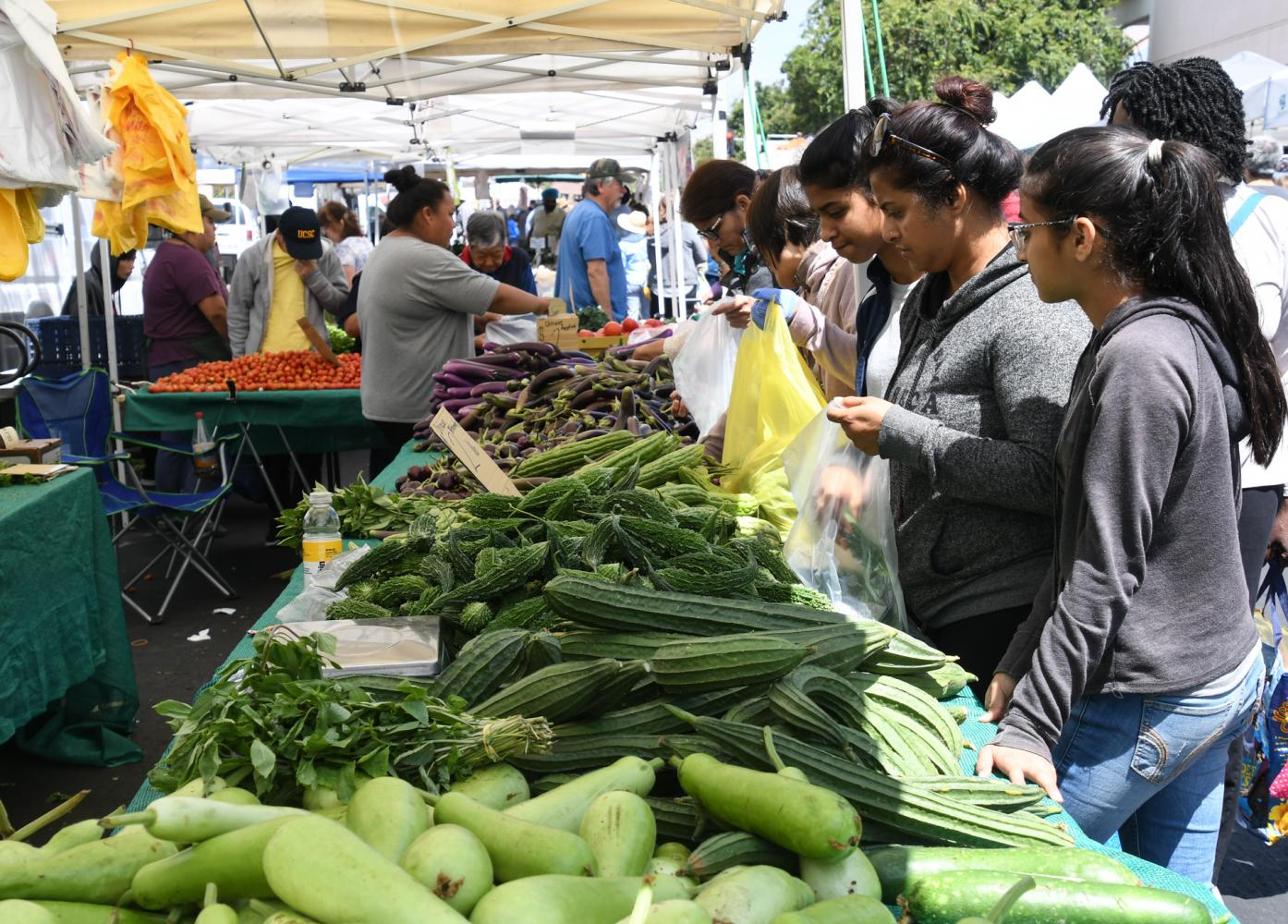 Shoppers sift through fruits and vegetables at the farmers market in downtown Hayward on Saturday near City Hall. The market has been an institution in the city for more than 20 years and is open year round, every Saturday from 9 a.m. to 1 p.m, rain or shine. The market features more than 35 farmers, food purveyors, and artisans selling locally grown organic produce, seafood, pastured eggs, cheese, nuts, honey breads, baked goods, plants, fresh-cut flowers, pre-packed cold and hot foods, artisanal crafts and jewelry.