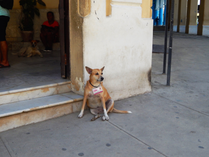 The dogs of Havana