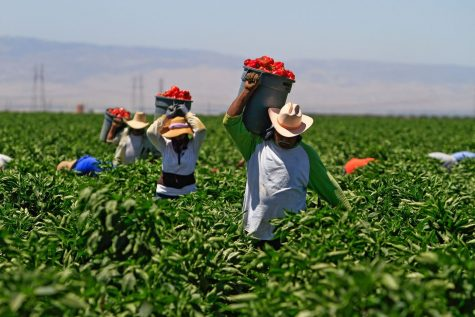 Tomato farm workers against Wendy's fast food chain