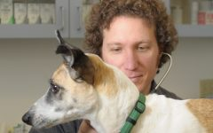 Local veterinarian answers questions about holistic practices and cannabis for pets
