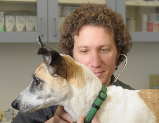 Local+veterinarian+answers+questions+about+holistic+practices+and+cannabis+for+pets