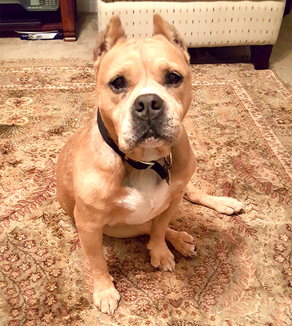 Hopes+for+a+misunderstood+dog+breed