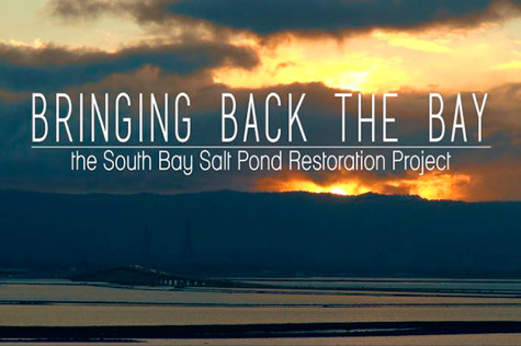 Bringing Back the Bay