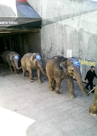 Protesters target  Ringling Bros.