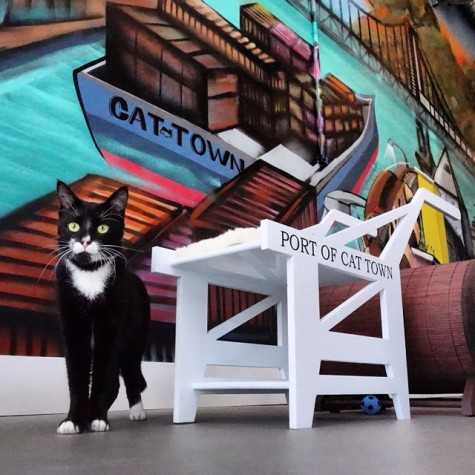 Coffee and cats blend in Oakland