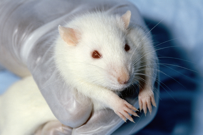 Technology offers hope for end of animal testing