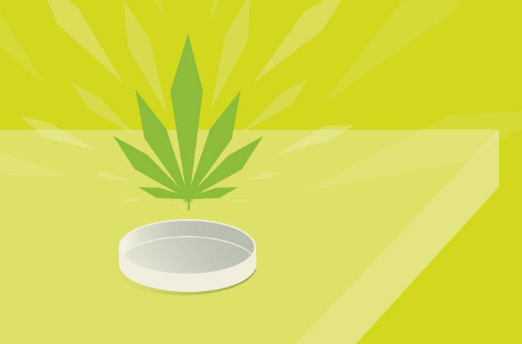 Amoeba adapts from music to marijuana