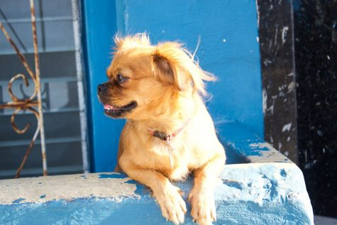 The dogs of Cuba