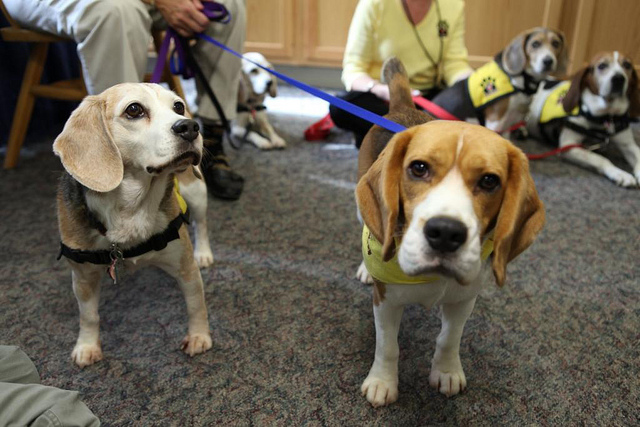 Casey and Denver greet visitors -- and the camera -- at Pet Therapy Awareness Day at Penn State Hershey Medical Center.