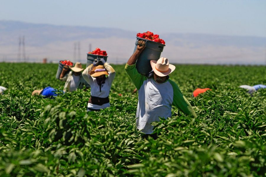 Tomato+farm+workers+against+Wendy%27s+fast+food+chain