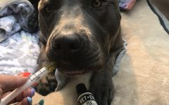 Cannabis is now for pets