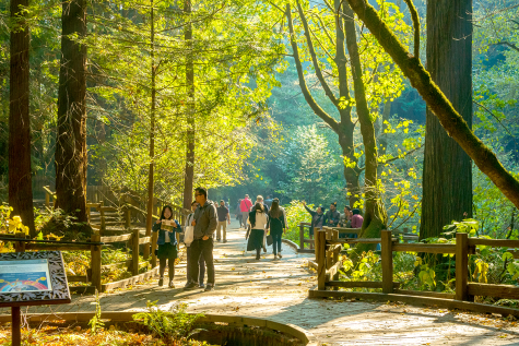 Visitors to the Muir Woods National Monument stop to take photos and walk along the beginning segment of the Muir Woods Main Trail around noon on Sunday Noveber 11th, 2018.