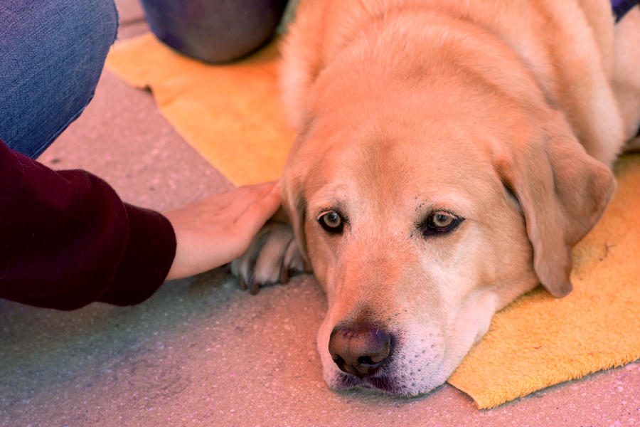 How+therapy+dogs+help+students