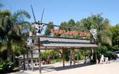 Eldest African elephant dies at Oakland zoo