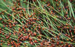 Catch a 'Loveliness' of ladybugs at Redwood Regional Park